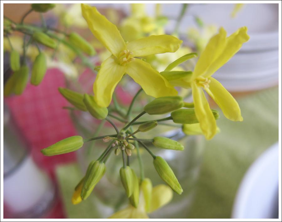 Blog zucchinicake1