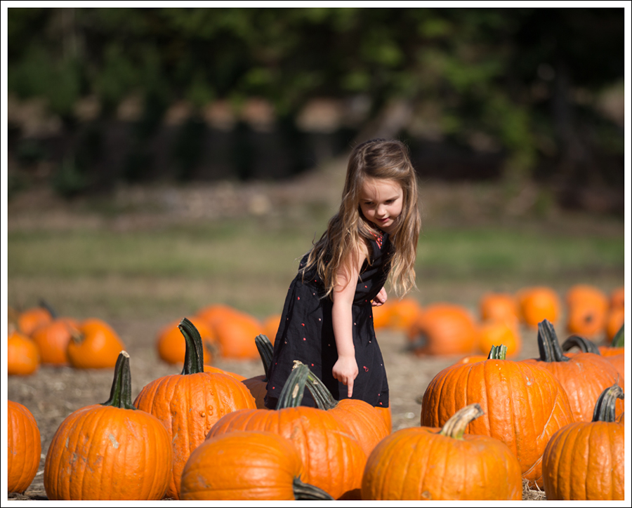 Blog Trinity Pumpkin Patch-1