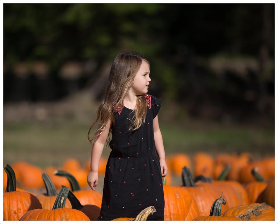 Blog Trinity Pumpkin Patch-2
