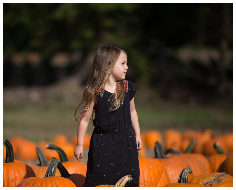 Blog Trinity Pumpkin Patch-2