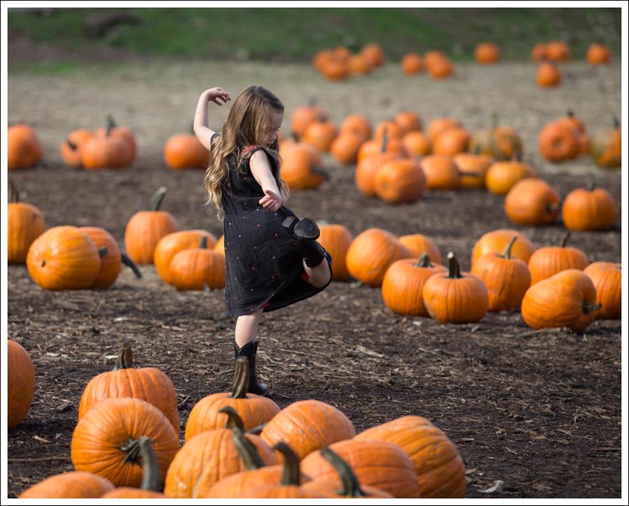 Blog Trinity Pumpkin Patch-4