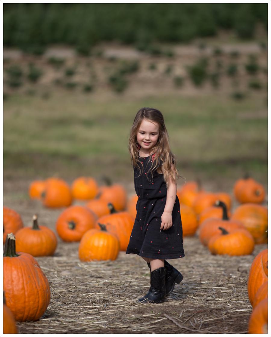 Blog Trinity Pumpkin Patch-6