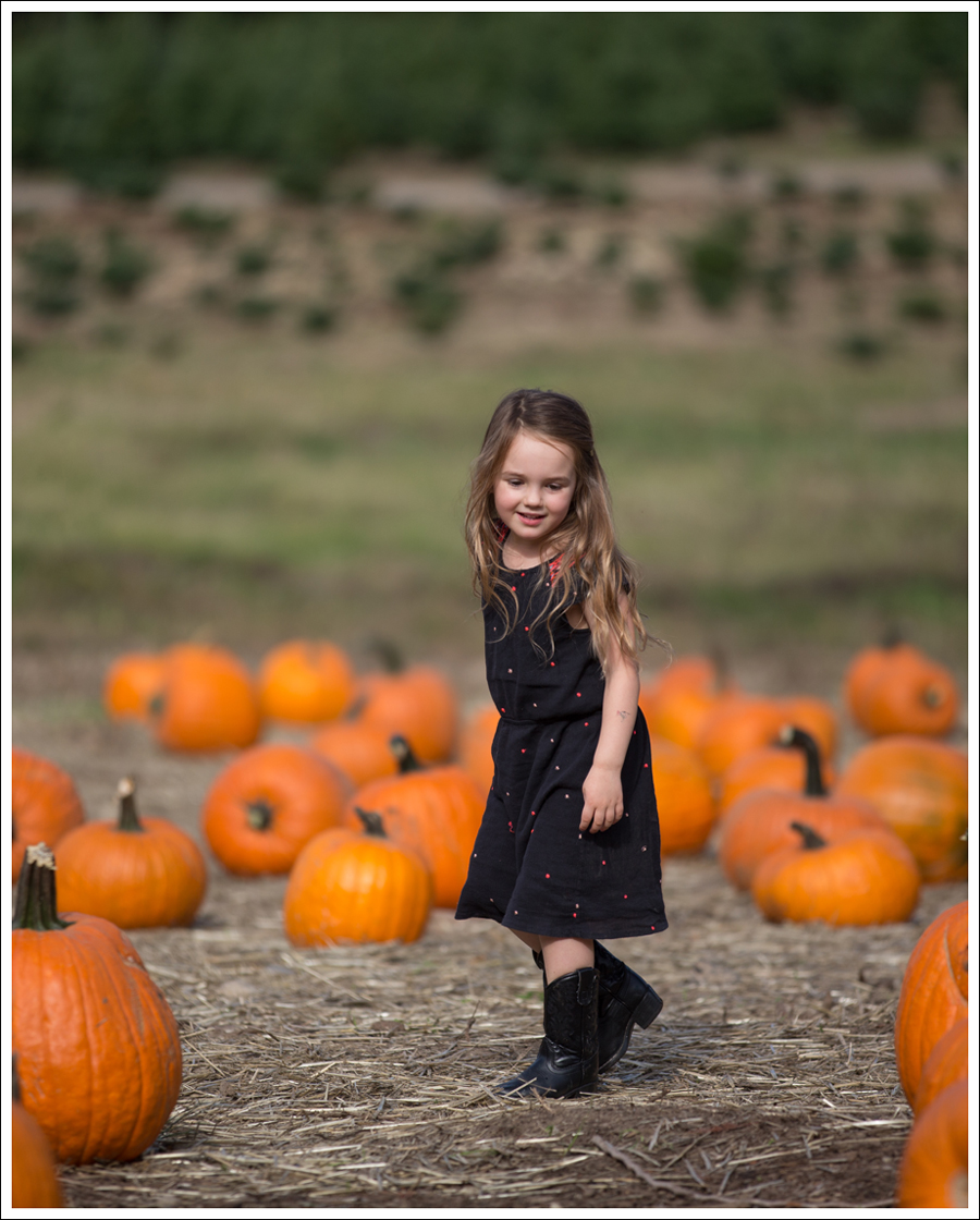 Blog Trinity Pumpkin Patch-6